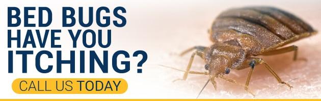 Call Phoenix Bed Bug Expert - 480-351-0375